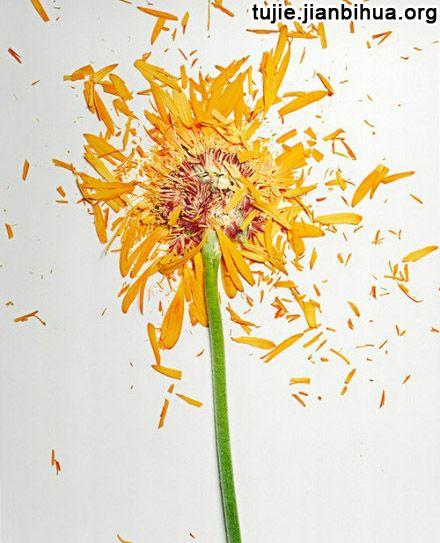 花瓣拼画作品图片欣赏图片